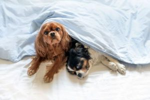 fitnest eletric stranding desk europe image of two cute dogs lying under the blanket for article fitnest electric standing desk image of a woman work remote on tropical beach for article i don't want to go back to work in the office